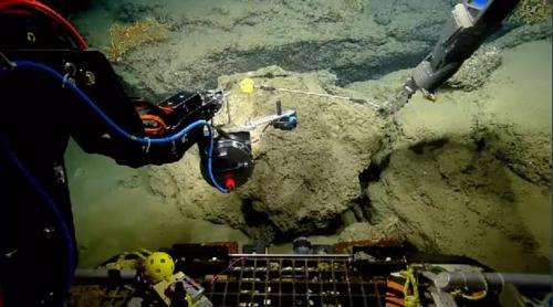 Live webcams: Scientists studying corals damaged by oil in the Gulf of Mexico