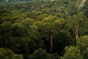 Manchester scientists head to tropical rainforests for climate study