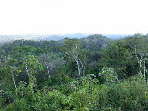 Meet the rainforest 'diversity police'