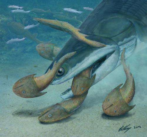 Researchers unearth largest Silurian vertebrate to date—meter long Megamastax