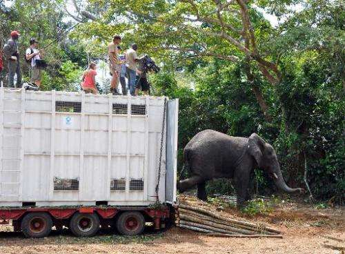 Members of a team of International Fund Animal Welfare take pictures of an elephant released on January 23, 2014 in the Azagny n