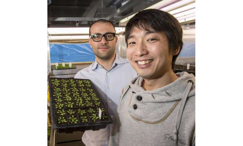 Missing link in plant immunity identified