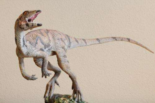 Early dino was turkey-sized, social plant-eater