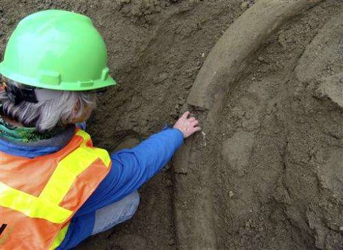 Museum hopes to excavate Seattle mammoth tusk