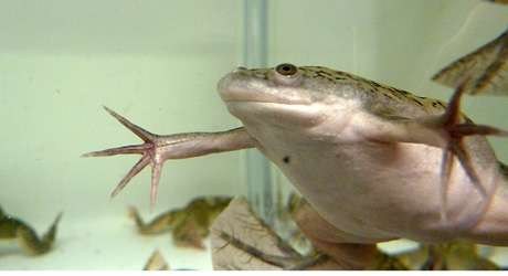 National Xenopus resource at the MBL innovates new way to study proteins