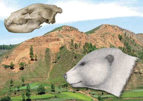 Nearest ancestor of living bears discovered from Gansu, China