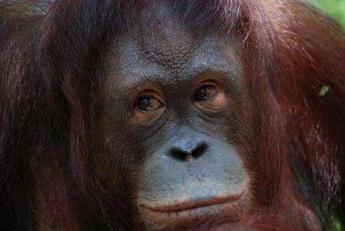 New book charts human-orangutan encounters