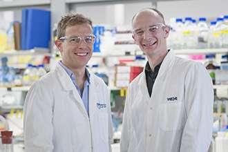 New compound blocks 'gatekeeper' enzyme to kill malaria