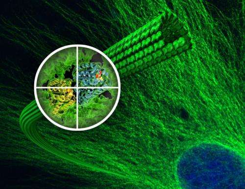 New details on microtubules and how the anti-cancer drug Taxol works