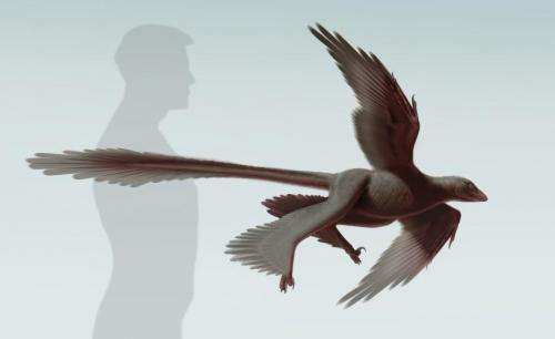 New feathered predatory fossil sheds light on dinosaur flight
