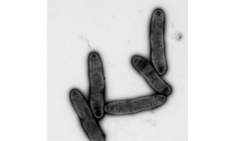 New membrane-synthesis pathways in bacteria discovered