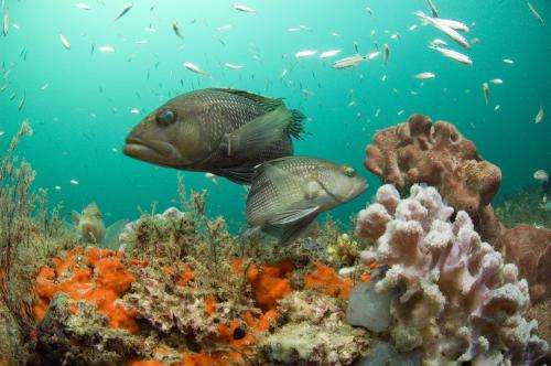 NOAA announces updated process for nominating new national marine sanctuaries