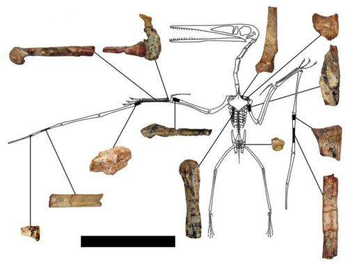 Oldest pterodactyloid species discovered, named by international team of researchers