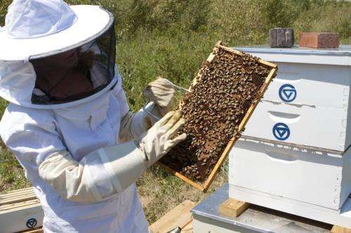 Online network connects honeybee keepers and researchers