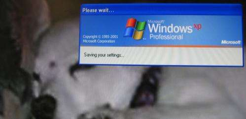Open source gives new life to old Windows XP machines