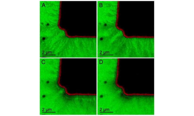ORNL microscopy system delivers real-time view of battery electrochemistry