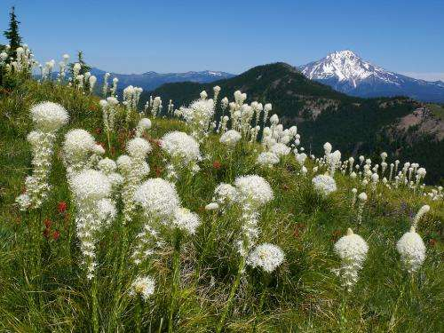 OSU app brings wildflower identification to your fingertips