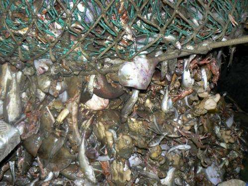 Overfishing in the English Channel leaves fisherman scraping the bottom of the barrel
