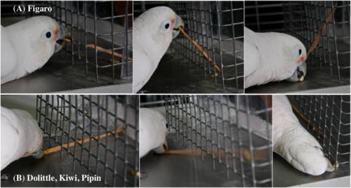 Parrots go to carpentry school