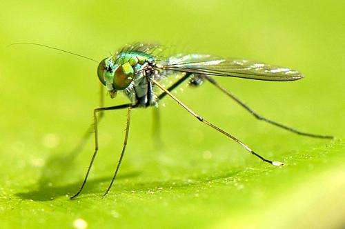 Pilbara study uncovers unique fly community