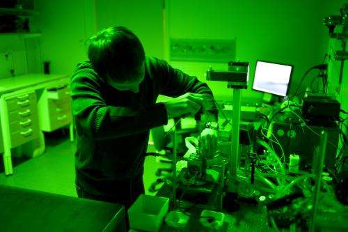 Pioneering findings on the dual role of carbon dioxide in photosynthesis