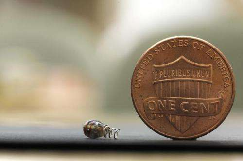Engineers invent a way to beam power to medical chips deep inside the body
