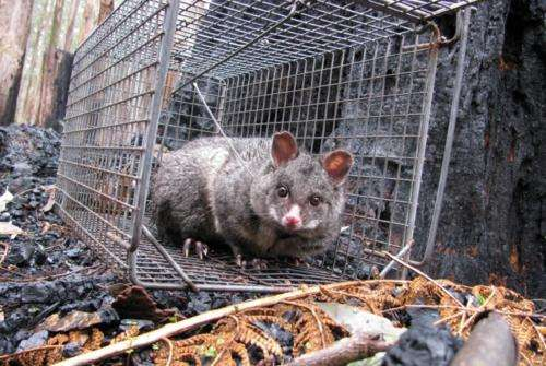 Possum poo study sheds light on human epidemics