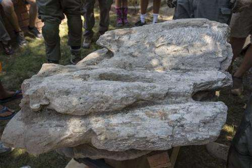 Rare whale fossil pulled from California backyard (Update)