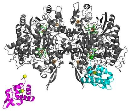 Redox cycling by DsrC protein suggests reason for interaction with dissimilatory sulfite reductase