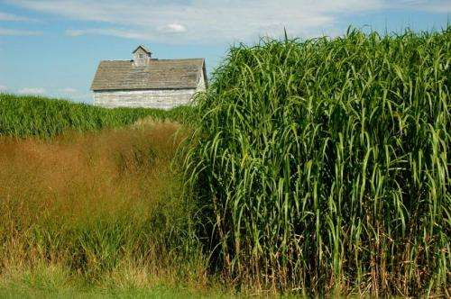 Regulations needed to identify potentially invasive biofuel crops