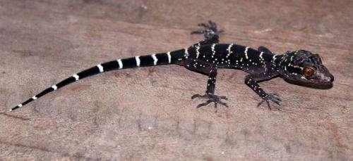 Reptile Database surpasses 10,000 reptile species