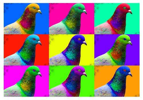 Research on pigeon color reveals mutation hotspot