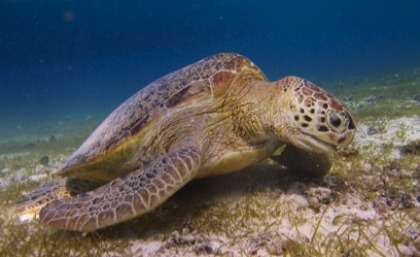 Rethink needed on turtle conservation