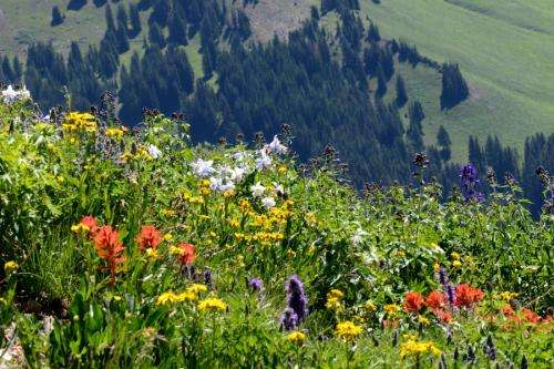 Rocky Mountain wildflower season lengthens by more than a month