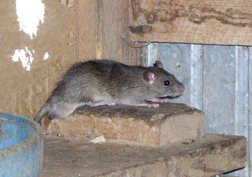 Rodent populations proliferate in some parts of Texas