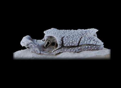 Fossil fish offers clues to jawed vertebrates origins
