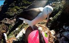 Seabirds' personalities determine feeding styles