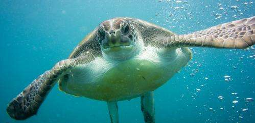 Sea turtles will feel the heat from climate change