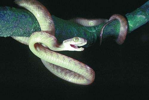 [Image: snake.jpg]