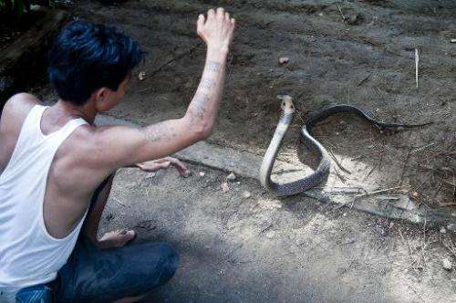 "Snake charmer Sein Tin feels protected by his ""magical"" tattoos, he is shown here with a cobra at Yangon Zoo on Octobe"
