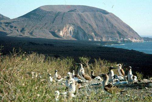 Source of Galapagos eruptions is not where models place it