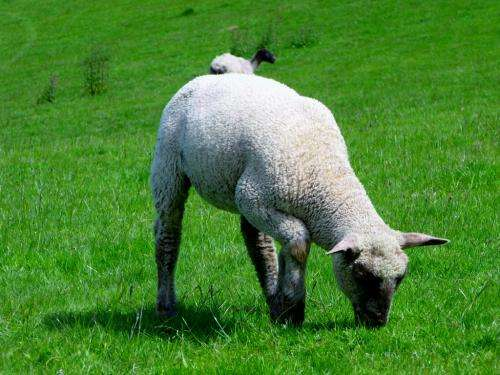 Stiffness and hardness of sheep molar enamel is lower than that of humans
