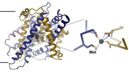Structure of an iron-transport protein revealed