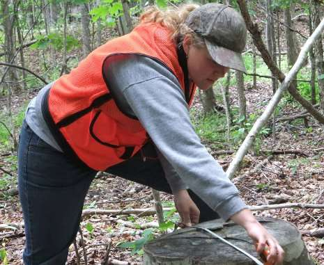Sustaining Northern hardwood forests