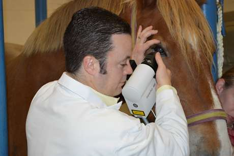 Technique is safer, faster way to diagnose horse eye problems