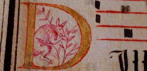 That's no kangaroo on the manuscript – so what is it?