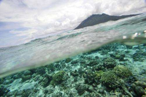 The Global Ocean Commission says the world's oceans need saving from pollution and overfishing, and urgent action is needed with