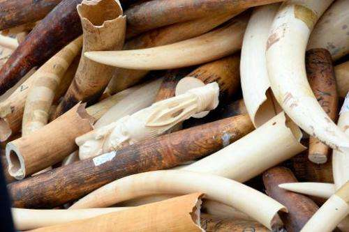 Three tonnes of illegal ivory are displayed on February 6, 2014 in front of the Eiffel tower in Paris