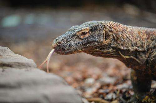 Top ten reptiles and amphibians benefitting from zoos