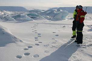 Arctic expedition pioneers technique  for polar bear research